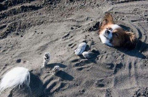Az elásott kutya